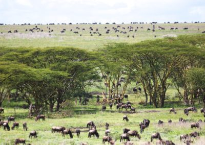 The Great Migration in the Serengeti on Safari with BJORN AFRIKA ©